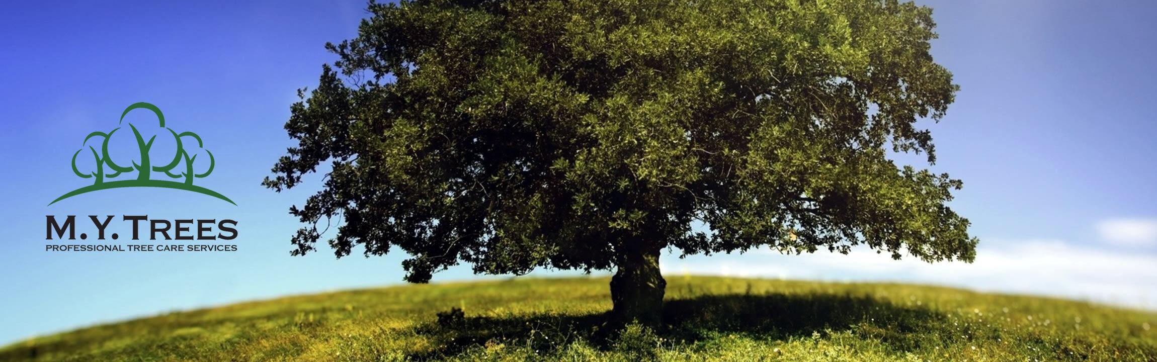 M.Y. Trees
